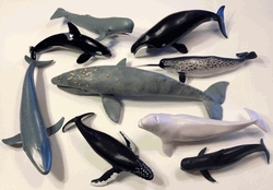 Whale Models - Set Of 9 - Whale-set - Air Sports Model Aircraft WHALE-SET