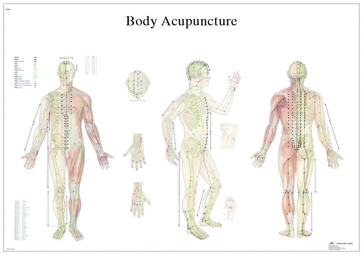 Anatomical Chart: Acupuncture Body; Paper - 12-4602p - Models And Charts 12-4602P
